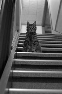 階段のまろ