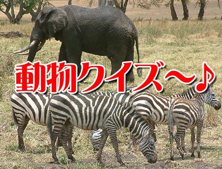 動物クイズ~♪