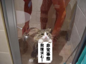 シュール猫3