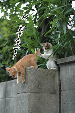 シュール猫4