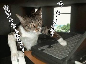 シュール猫5