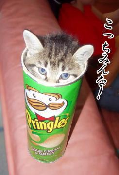 シュール猫6