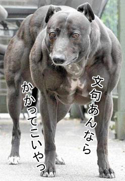 シュールな犬達4