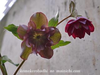 flower2012-1.jpg