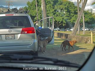hawaii2011-22.jpg