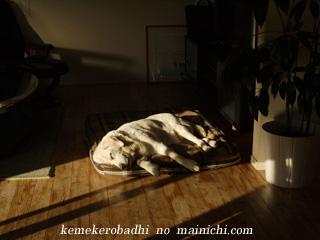 kemel2011-13.jpg