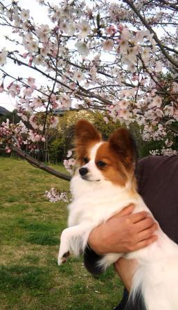 千本桜緑地でラビ