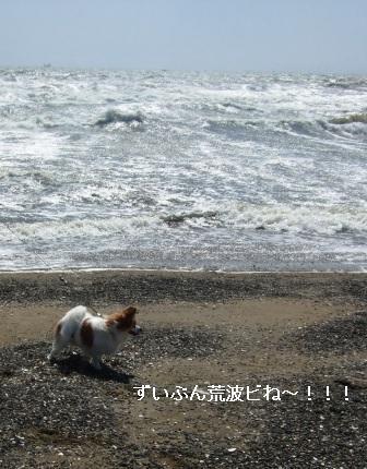 稲毛海岸ラビ2