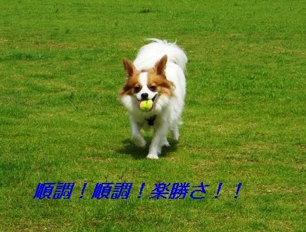 ボール追いかけ3