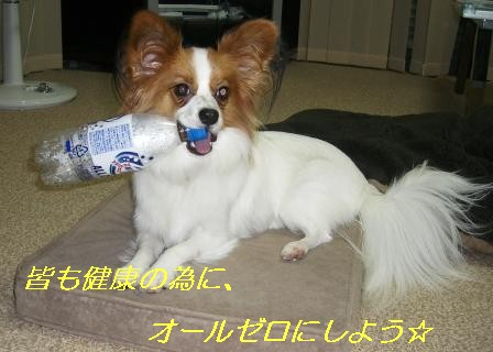 ペットボトル犬4
