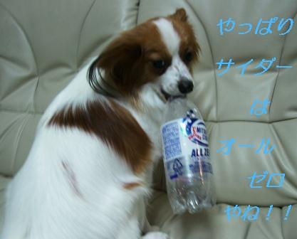 ペットボトル犬3