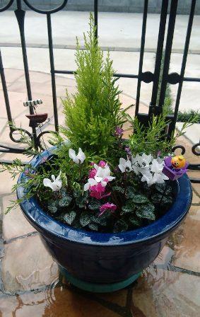 大鉢で寄せ植え