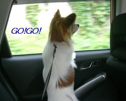 GOGO.jpg