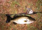 bass 002