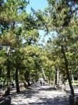 出雲大社参道の並木