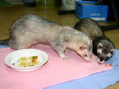『ウマウマ~♪』『きれいに食べなきゃいけませんよ!』