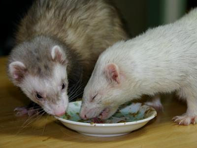 『うまうまうまうま~♪♪♪』『あぁ~ん、ボクのご飯なのに~』