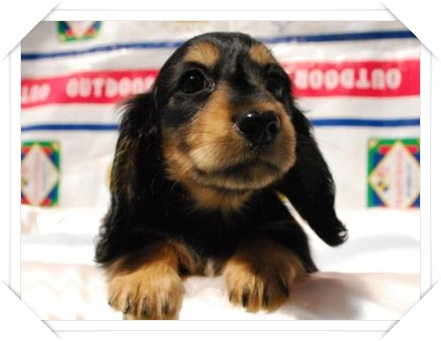 puppy1b.jpg