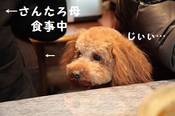 20080309_0998s.jpg