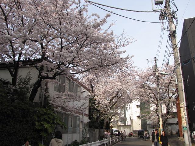 09tokyosakura