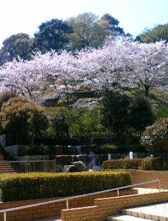 蓮花寺池公園2