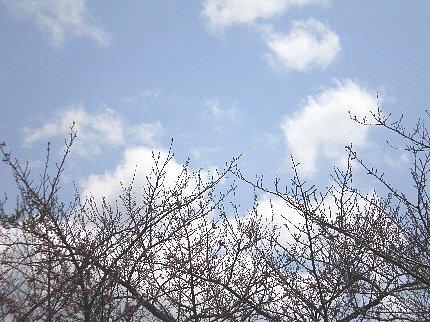 桜の「枝先」と空