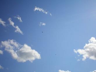 鳥と飛行機