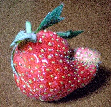 イチゴ クシャッ