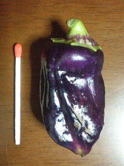 紫パプリカ 収穫1号