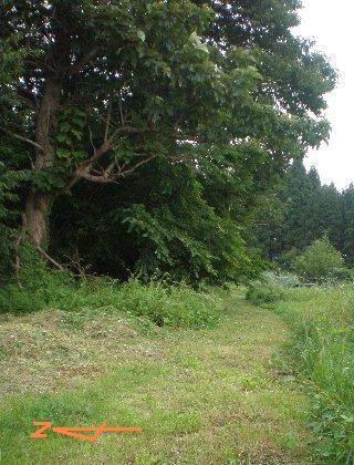小道  桐の木やら桑の木も