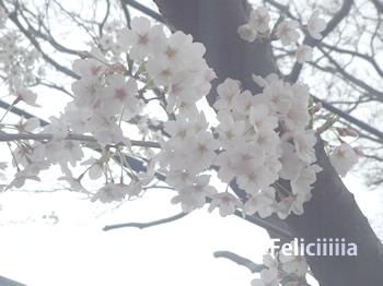 sakurazaka05.jpg
