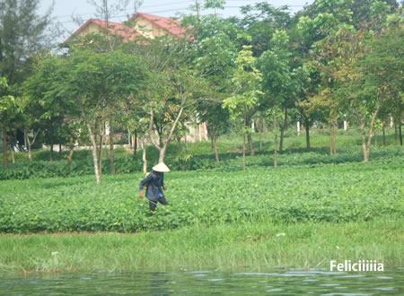 vietnam149.jpg