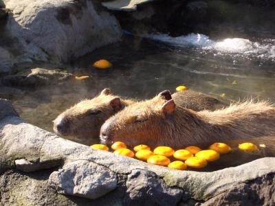 capibara.jpg