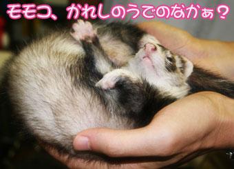 2009momoko-7.jpg
