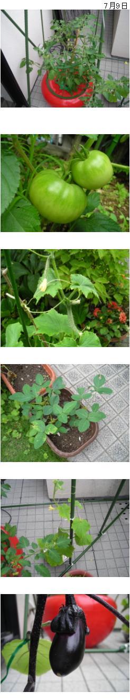 080709家庭菜園