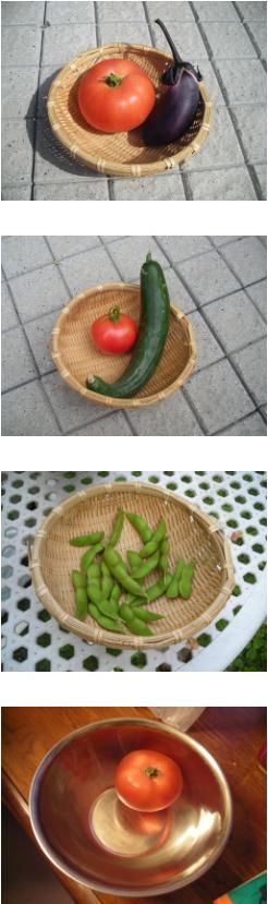 080720家庭菜園