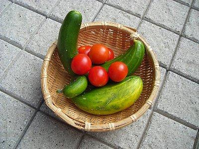 収穫080809