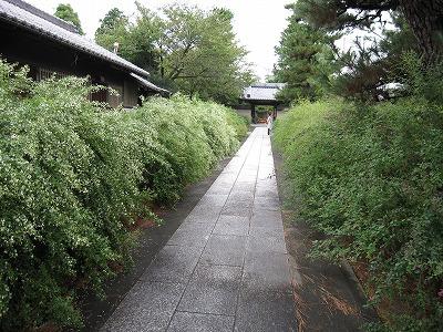 円光寺 萩4