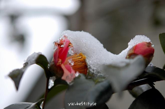 m-yuki5.jpg