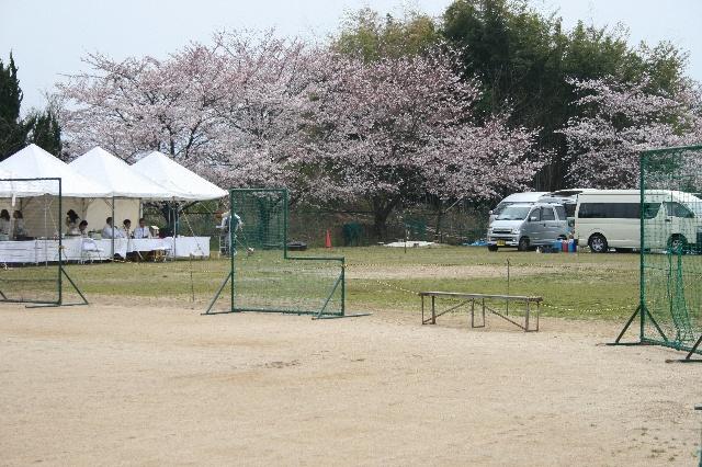 花見会場にテント?