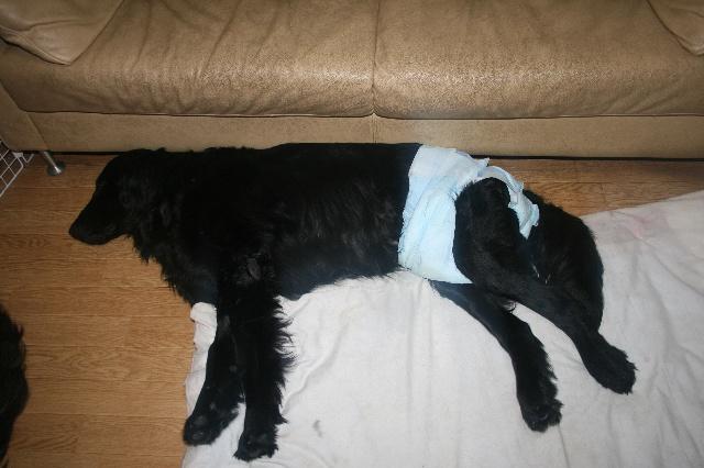 父が寝てるソファーの下を陣取るフラッド!