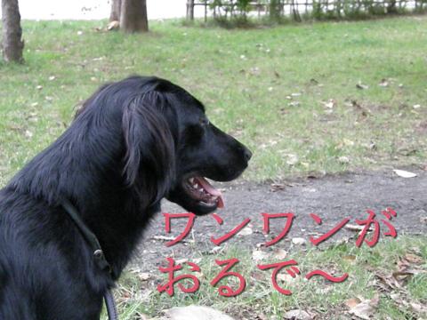 P9070139.jpg