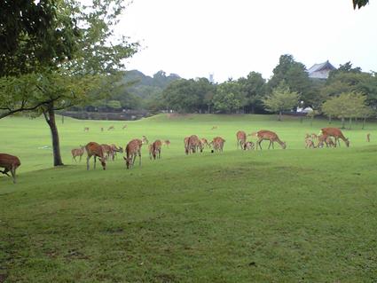 200809奈良鹿