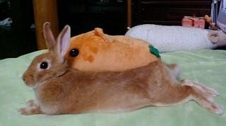 nana_kapibara