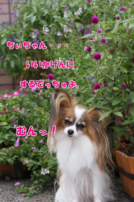 IMG_5828-777.jpg