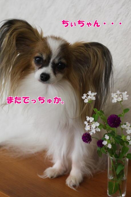 IMG_5922-777.jpg
