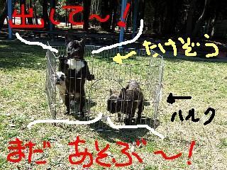 武蔵(たけぞう)は特に『出して欲しい』ビーム出しまくり(^^)