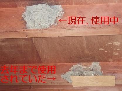 ◆せっかくのツバメの巣が…◆