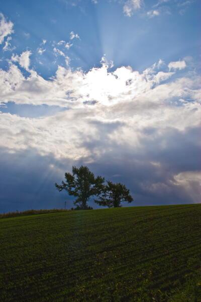夫婦の木(麦春と時雨雲)