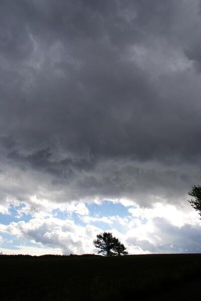 時雨の雲と夫婦の木